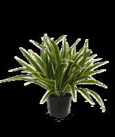 Chlorophytum Kunst Chlorophytum 30 cm in 10 cm pot
