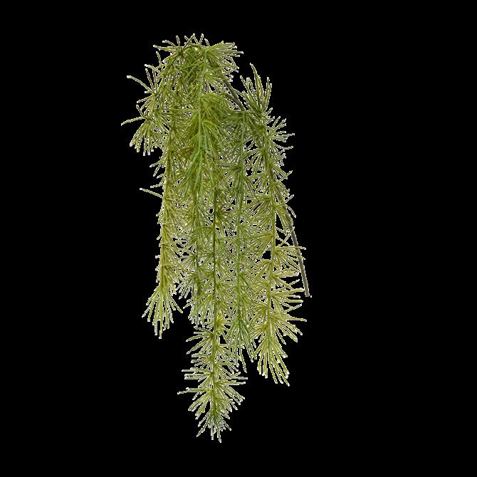 Asparagus Asparagus Spengeri kunsttak 40 cm