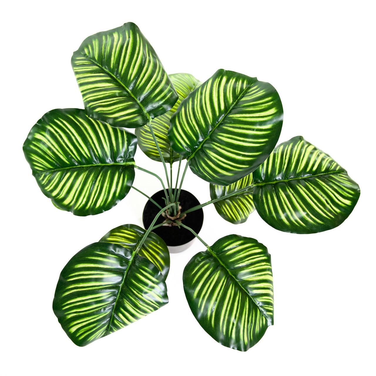 Kunst Calathea Orbifolia Pauwenplant 60 cm
