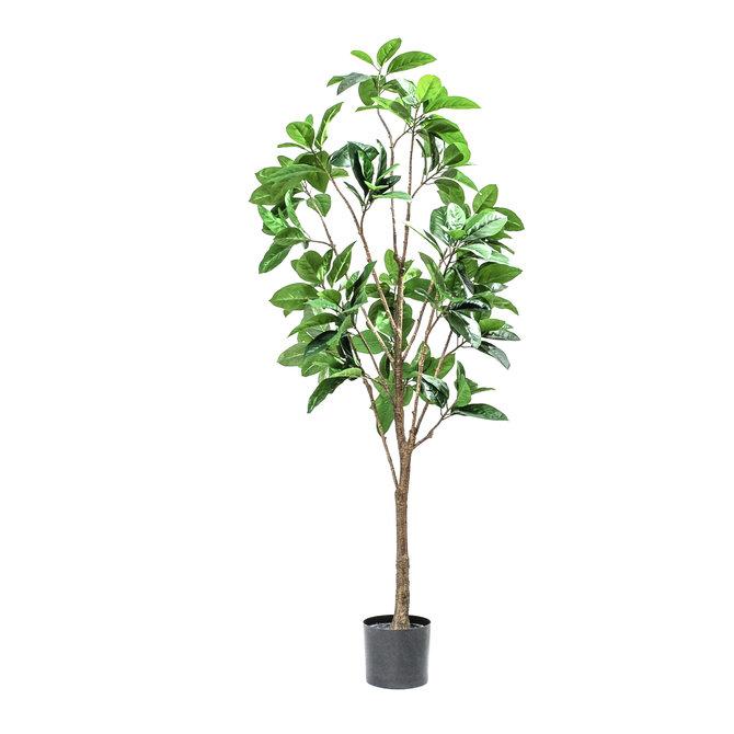 Rubber Kunst Rubberboom 180 cm