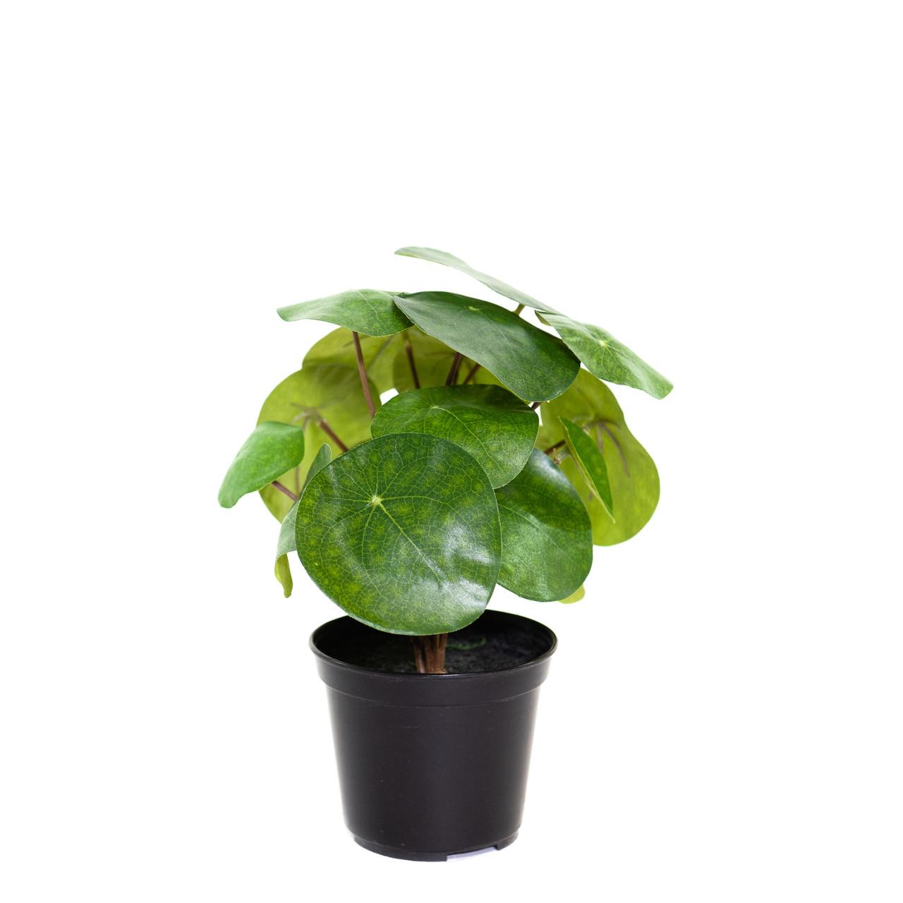 Kunst Pannenkoekenplant 20 cm