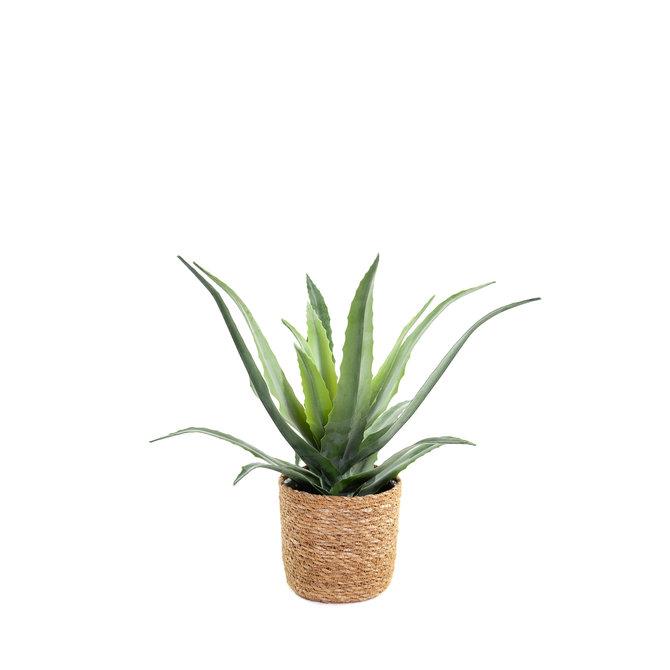 Aloë Vera Kunst Aloë Vera plant 30 cm