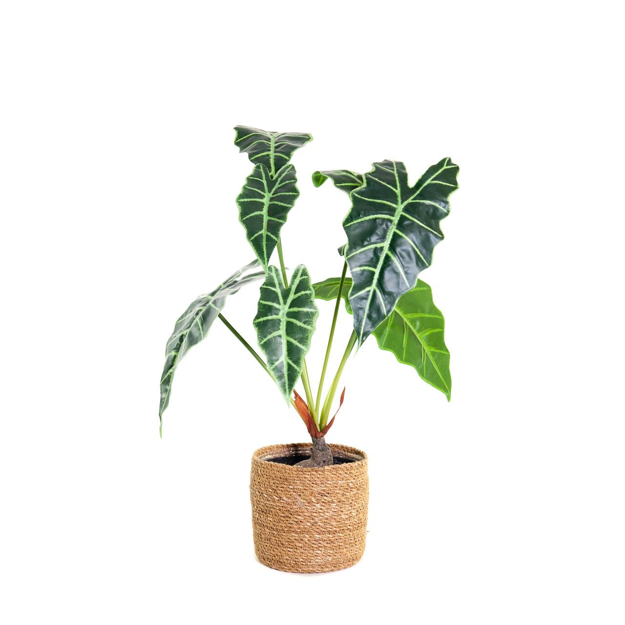Kunst Alocasia Polly (skeletplant) 60 cm