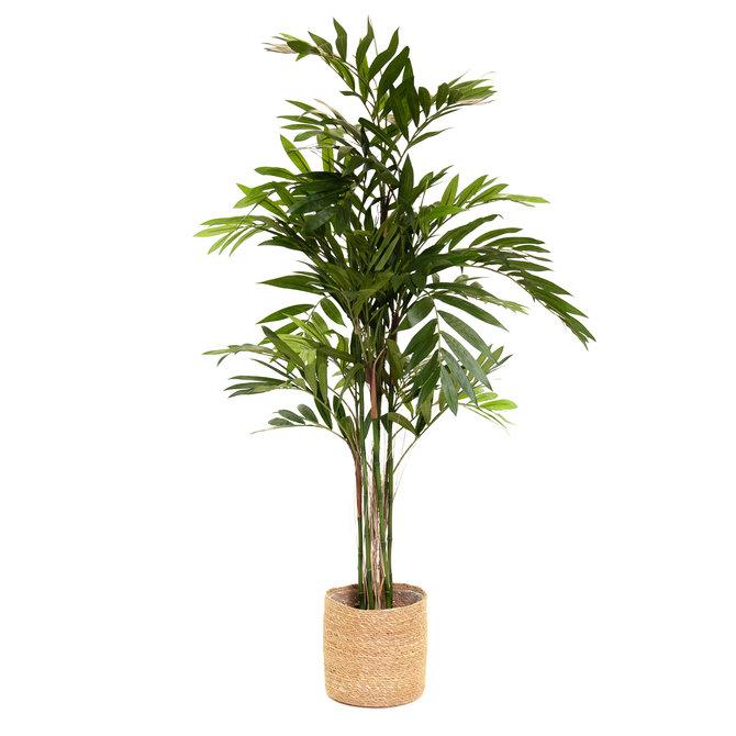 Palm Kunst Palm Chamaedorea 150 cm