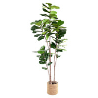 Ficus Lyrata Kunst Ficus Lyrata 240 cm