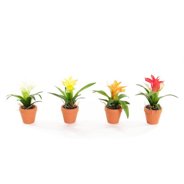 Kunst Mini Guzmania's 18 cm, set van 4 kleuren