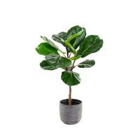 Ficus Lyrata Kunst Ficus Lyrata 60 cm