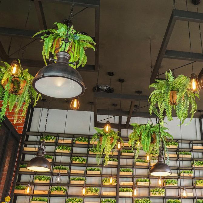 Hangplanten Kantoor