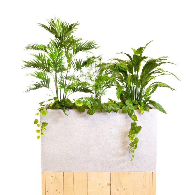 Kleine Kantoorplanten