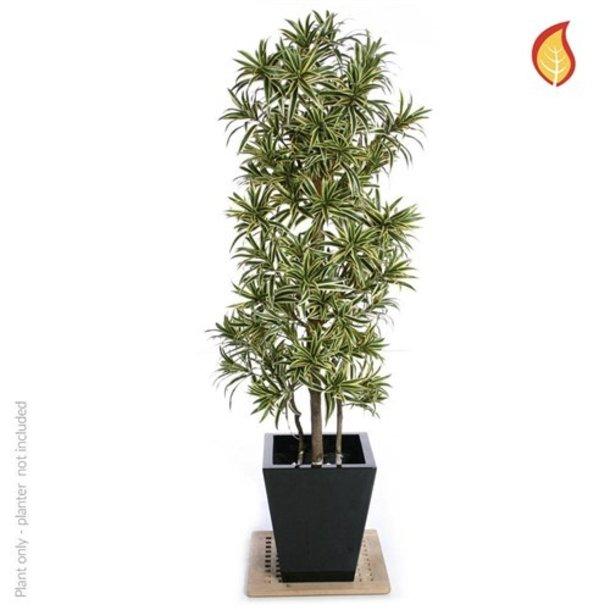 Dracaena Kunstplant 180 cm FR