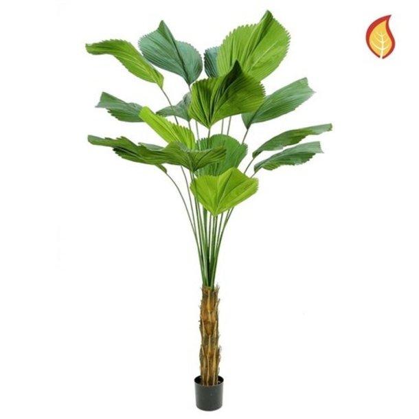 Kunst Palm Licuala Grandis DB 200cm FR