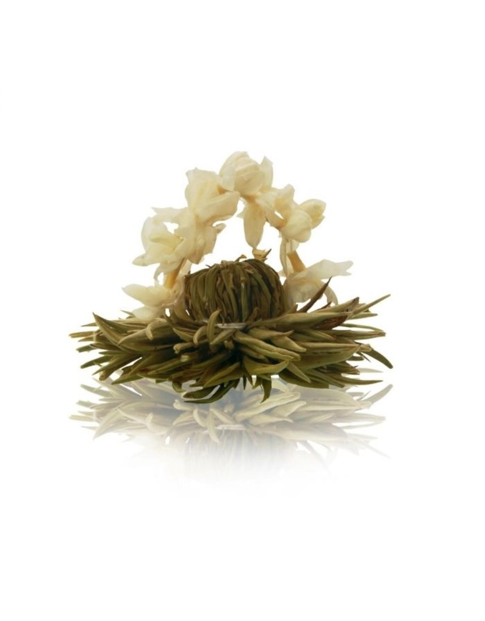 Theebloem van witte thee met bloemenboogje van jasmijn