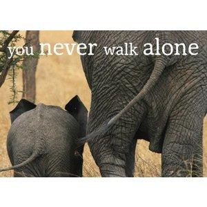 Postkaart olifanten