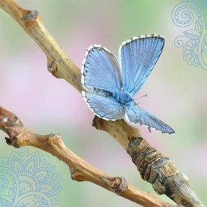 Kaart met vlinder
