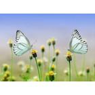 Kaart met mooie afbeelding van 2 vlinders