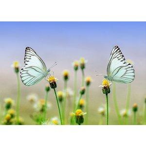 Kaart met mooie afbeelding van 2 vlinders | eenbeetjegeluk.nl