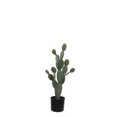 MiCa 1030099 Cactus in pot