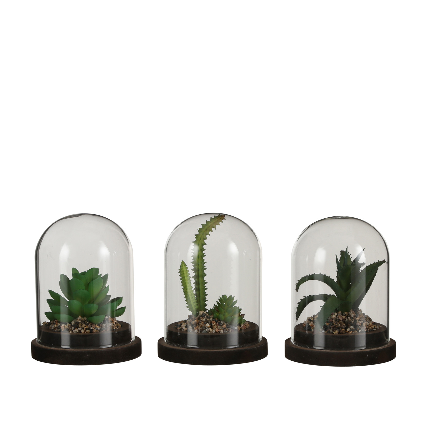 MiCa 1066912 Bell jar with succulent plant