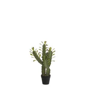 MiCa 1058760 Cactus in plastic pot