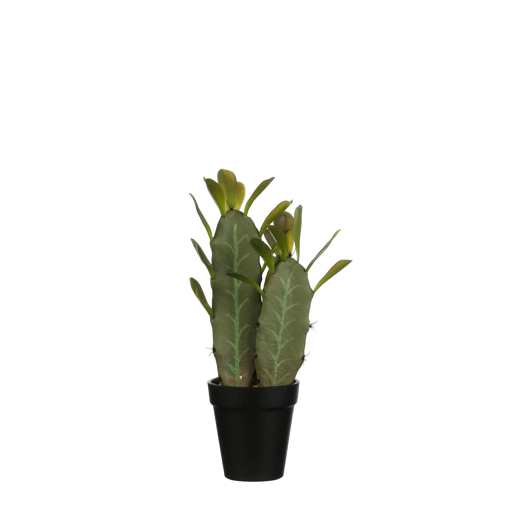 MiCa 1058759 Cactus in plastic pot