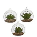 MiCa 1047780 Succulent plant green