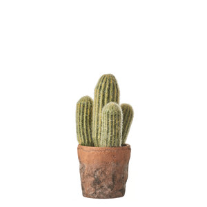 MiCa 1047905 Cactus green in pot