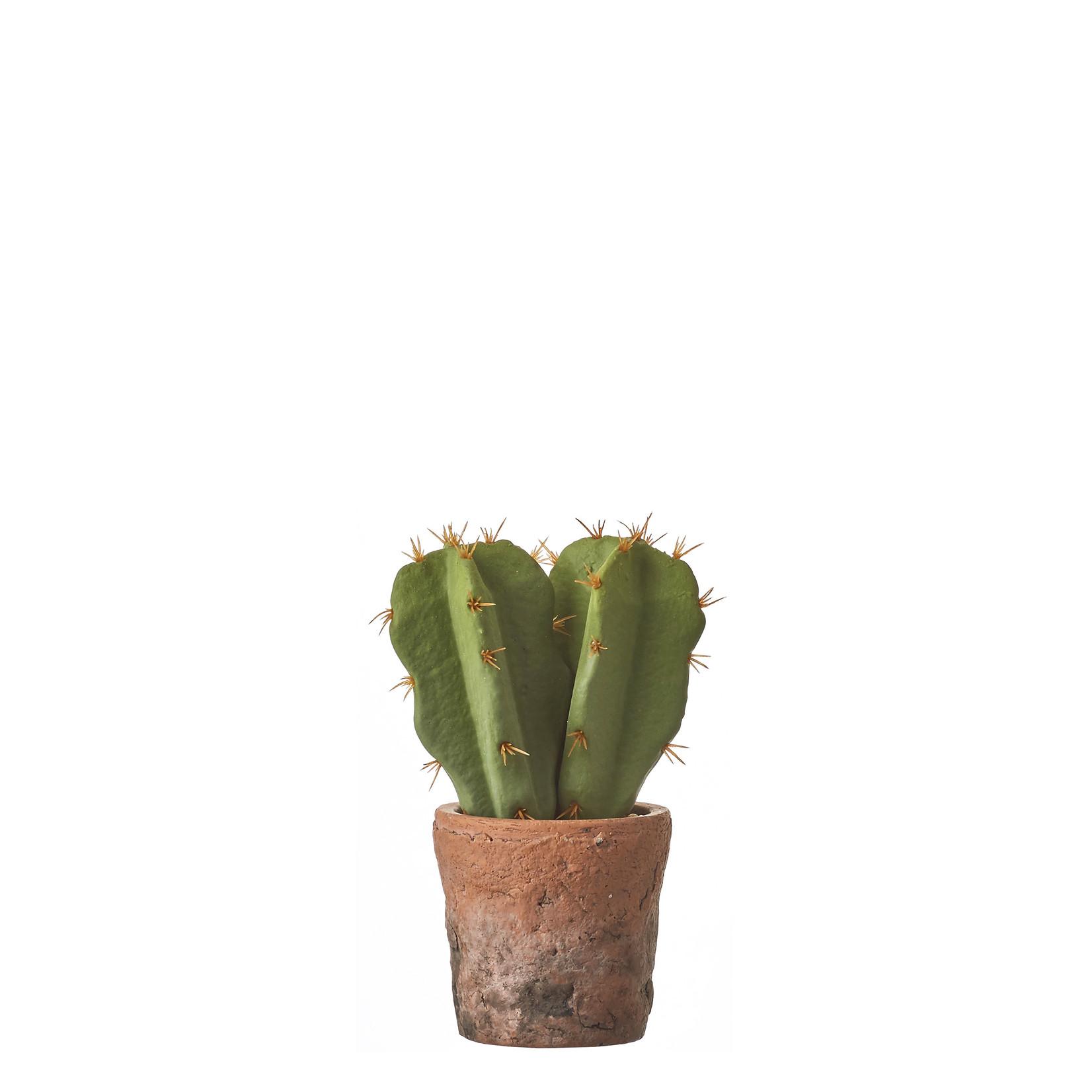 MiCa 1047907 Cactus groen in pot