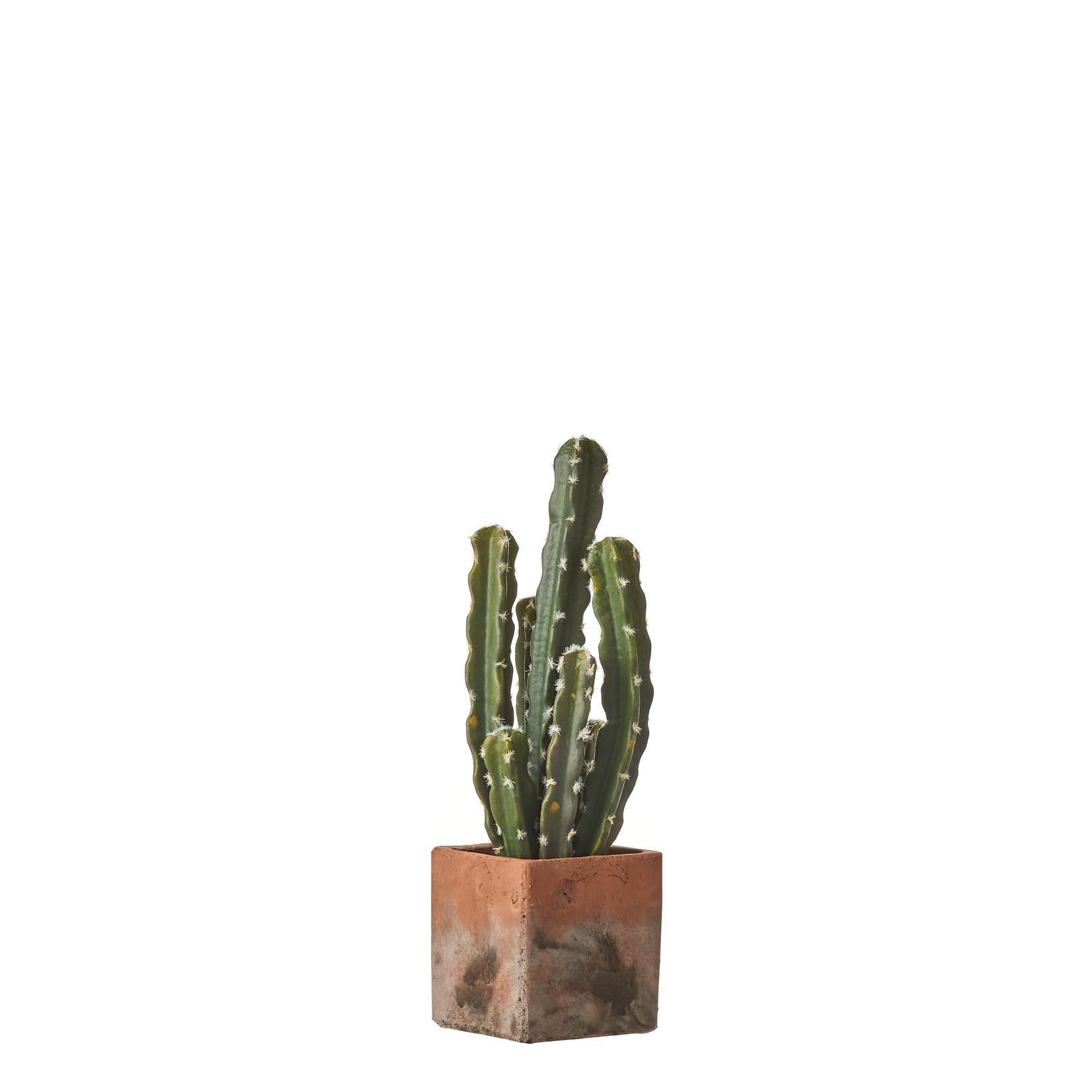 MiCa 1047909 Cactus groen in pot