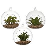 MiCa 1047781 Succulent plant green