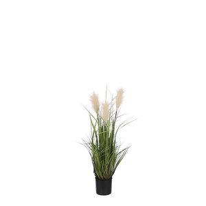 Mica Decorations Ornamental grass in pot peach