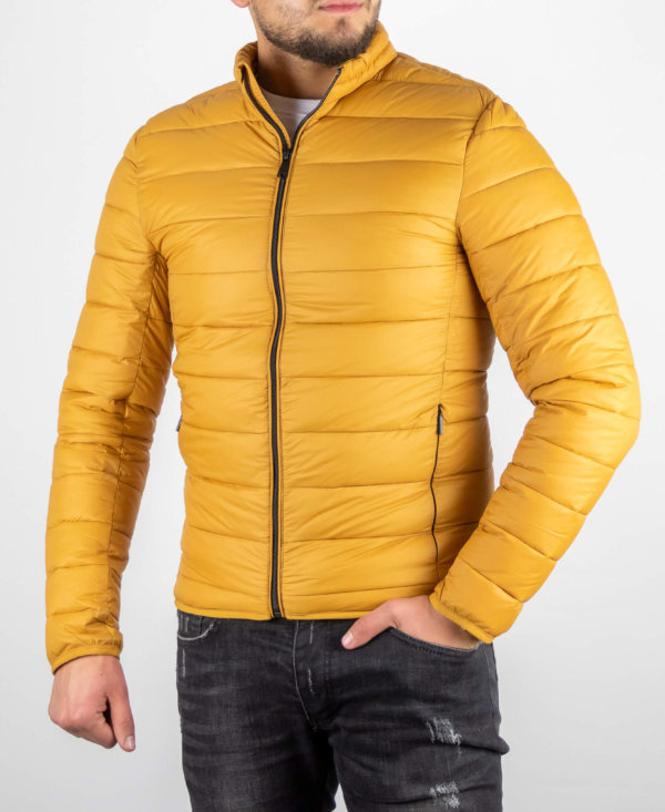 Parma yellow Jacket