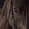 Bescherming Paard