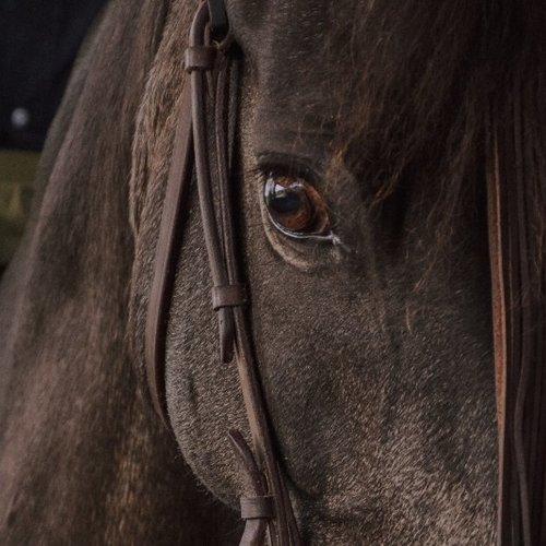 Bescherming voor het Paard