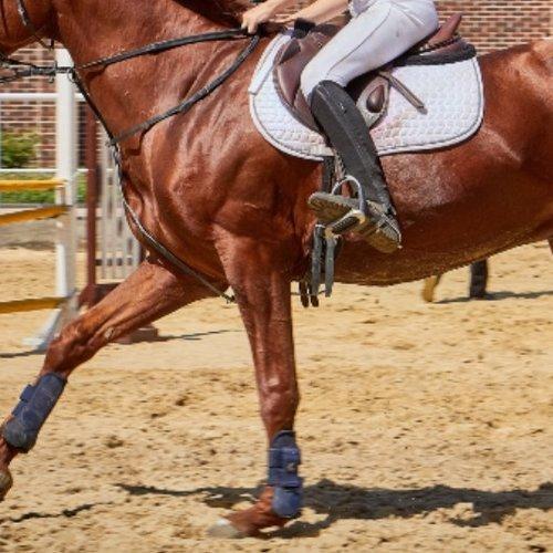 Beenbescherming Paard