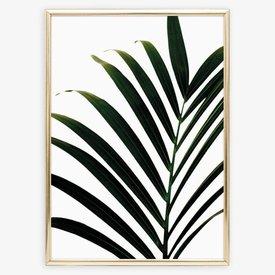 """Poster """"Palm Leaf"""" von Tales by Jen"""