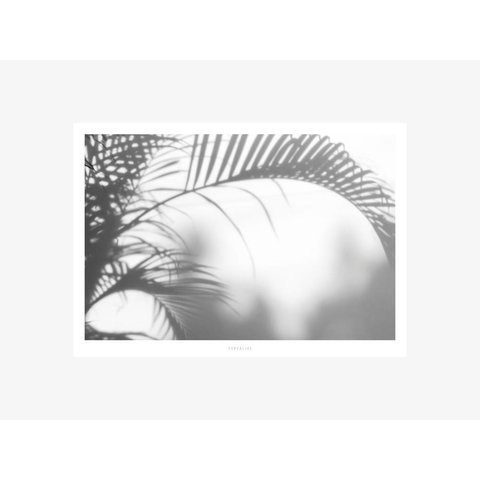 "Poster ""All About Palms No. 3"" von typealive"