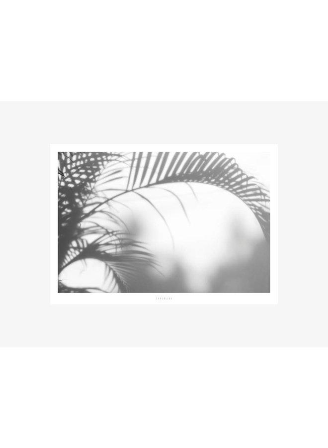 "Poster ""All About Palms No. 3"" von typealive"