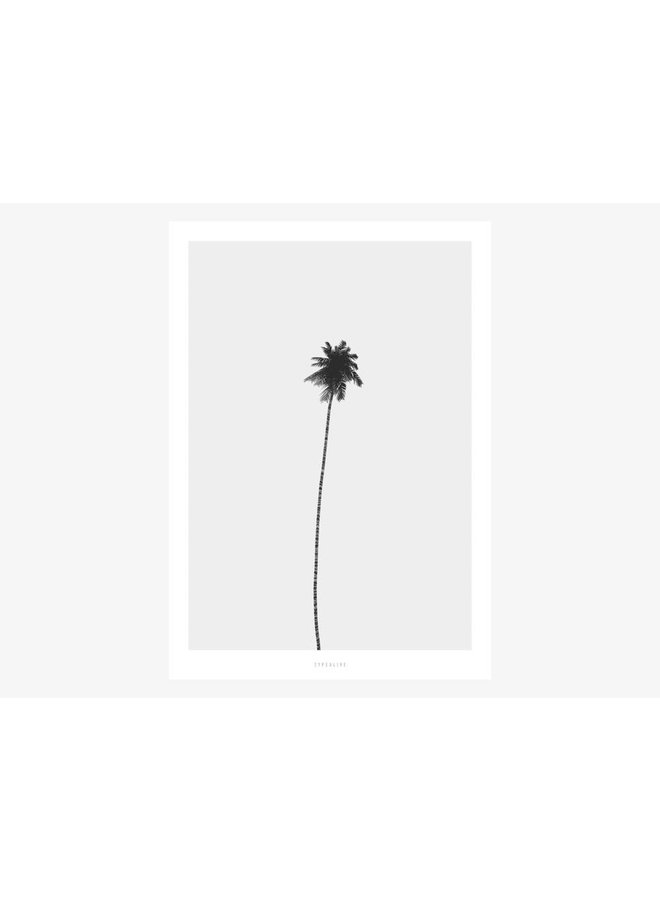 "Poster ""All About Palms No. 4"" von typealive"