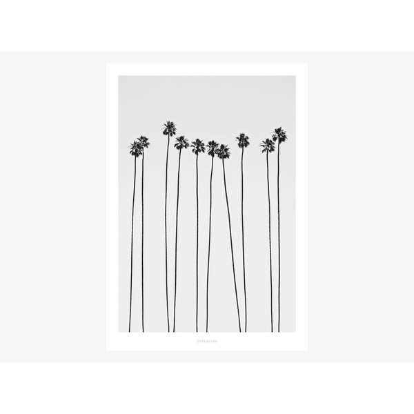 """typealive Poster """"All About Palms No. 5"""" von typealive"""