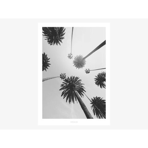 "Poster ""All About Palms No. 7"" von typealive"