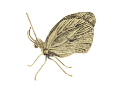Artikel mit Schlagwort Schmetterling