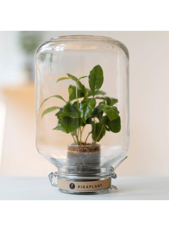"Pikaplant Jar ""Coffea"""