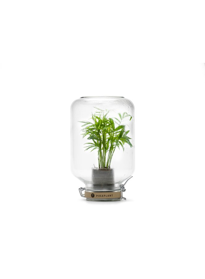 "Pikaplant Jar ""Chamaedorea"""