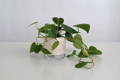 Artikel mit Schlagwort Design Blumentopf
