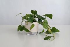 Artikel mit Schlagwort Selbstbewässernder Blumentopf