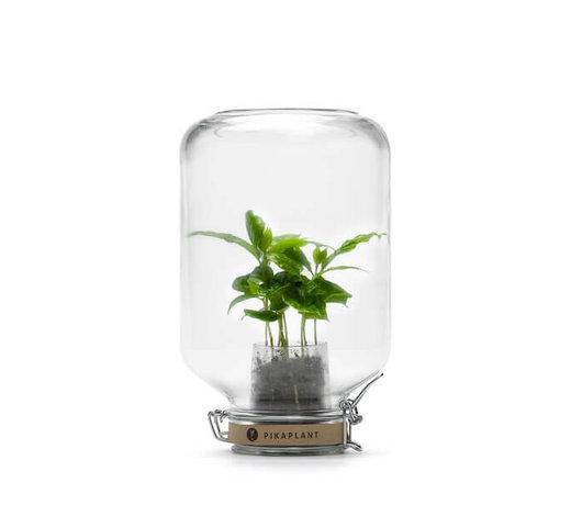 Pflanzen und Planztöpfe für dein Zuhause!