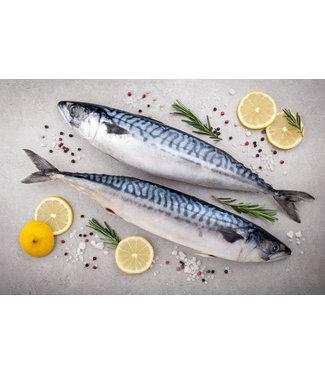 Makreel vers (ca. 500 gram)