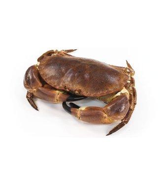 Noordzee krab levend (1 kg.)
