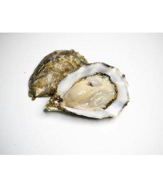 Ierse oesters (de Oisri fearr)