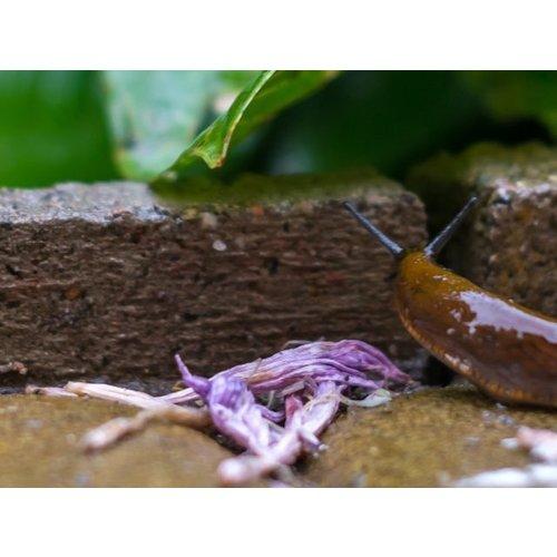 Pokon Pokon Bio Against snails granules
